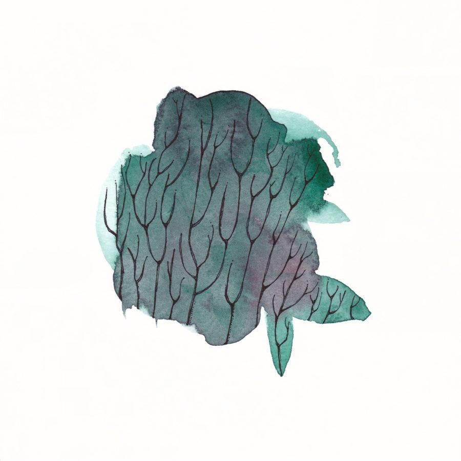 Aine Atara Mac Dermott, Seaweed