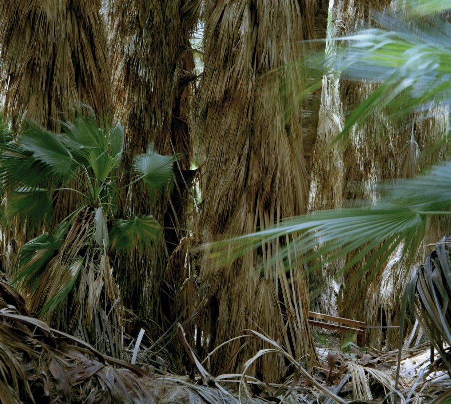 Fiona Hackett, Thousand Palms Oasis